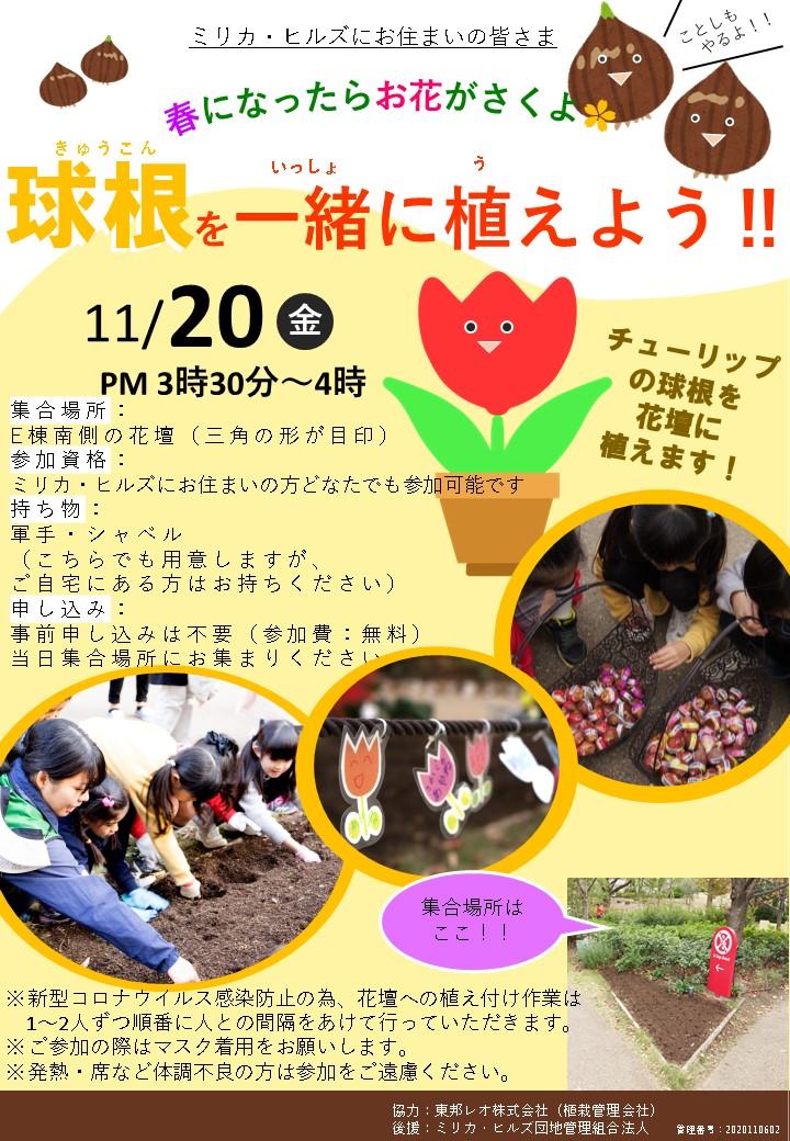 11月20日(金)に「球根植えイベント」を開催します。